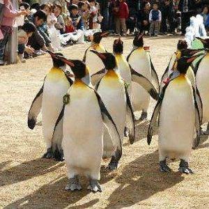 长崎企鹅水族馆旅游景点攻略图