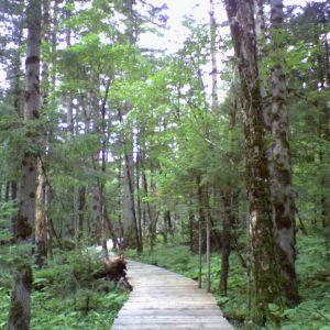镜泊湖地下森林旅游景点攻略图
