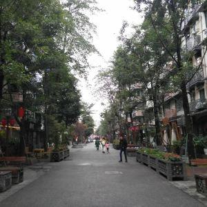 泡桐树街旅游景点攻略图