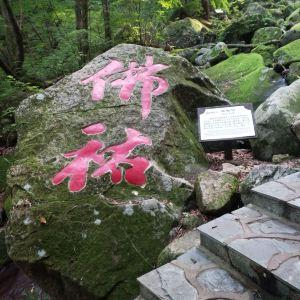 枫林谷森林公园旅游景点攻略图