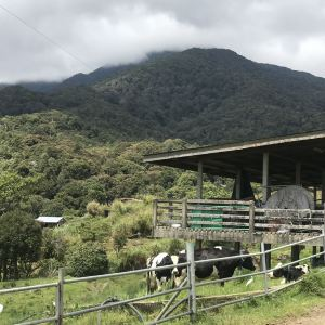 Desa奶牛农场旅游景点攻略图