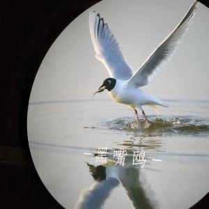 红海滩湿地科学馆旅游景点攻略图