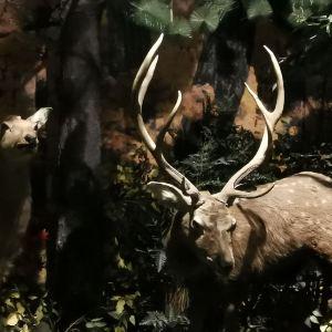 长白山自然博物馆旅游景点攻略图
