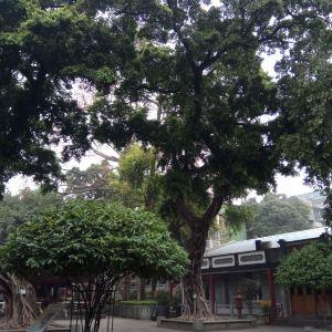六榕寺旅游景点攻略图