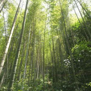 叫水坑原始森林旅游景点攻略图