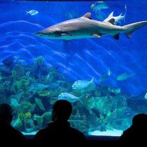 墨尔本水族馆旅游景点攻略图