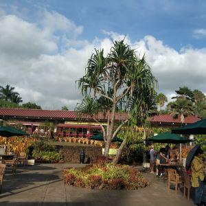 都乐菠萝种植园旅游景点攻略图