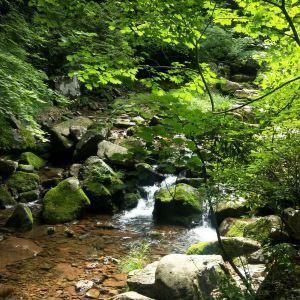 绿石谷旅游景点攻略图