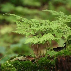 五营国家森林公园旅游景点攻略图