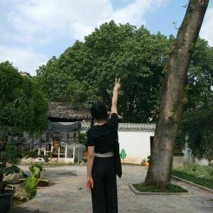 枇杷山公园旅游景点攻略图