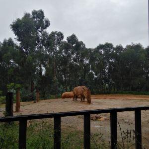 云南野生动物园旅游景点攻略图