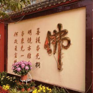 曹州牡丹园旅游景点攻略图