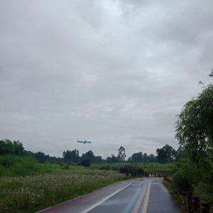 空港花田旅游景点攻略图