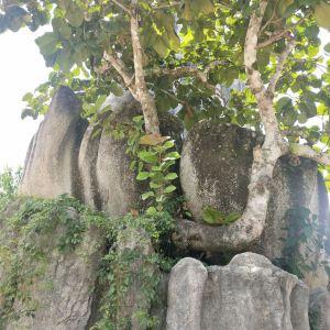 茶溪谷旅游景点攻略图