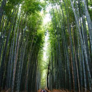 嵯峨野竹林旅游景点攻略图