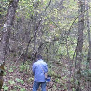 原始森林旅游景点攻略图