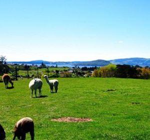 天堂农庄旅游景点攻略图