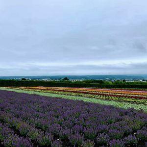Flower Land上富良野旅游景点攻略图