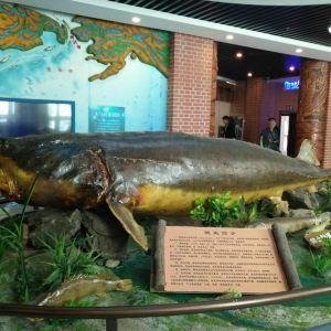 抚远鱼文化体验馆旅游景点攻略图