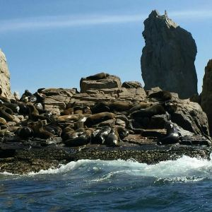 Los Cabos Tarzan Boats旅游景点攻略图