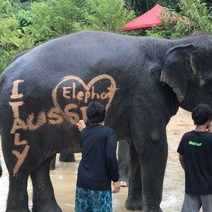 普吉岛耐迪大象保护营旅游景点攻略图