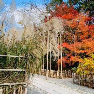 龙安寺旅游景点攻略图