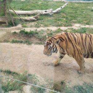 衡水野生动物园旅游景点攻略图