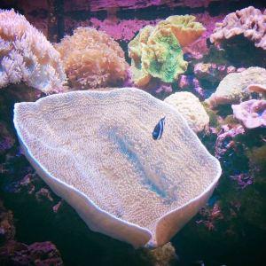 兰卡威海底世界旅游景点攻略图