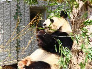 神户市立王子动物园旅游景点攻略图