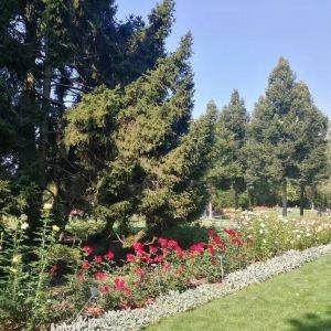 玫瑰园旅游景点攻略图