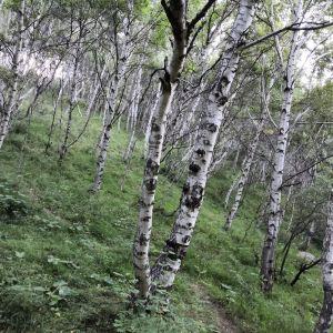 苏木山旅游区旅游景点攻略图