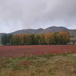 红草地旅游景点攻略图