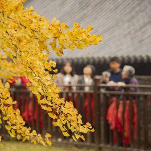 古观音禅寺旅游景点攻略图