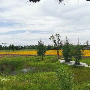 碱水河国家湿地公园旅游景点攻略图