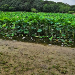 石家庄植物园旅游景点攻略图