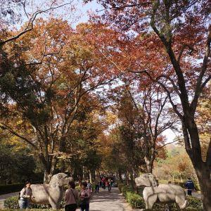 神道旅游景点攻略图