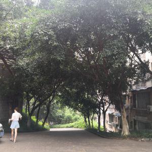 西南大学旅游景点攻略图