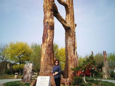 Laiyang Cretaceous National Geopark