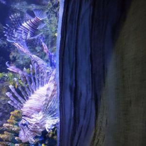 郑州海洋馆旅游景点攻略图