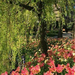 趣伏里公园旅游景点攻略图