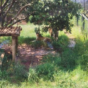 长沙生态动物园旅游景点攻略图