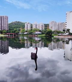 [广东游记图片] 台风天去哪儿?珠海新晋网红酒店珠海度假村酒店星海楼打卡游!