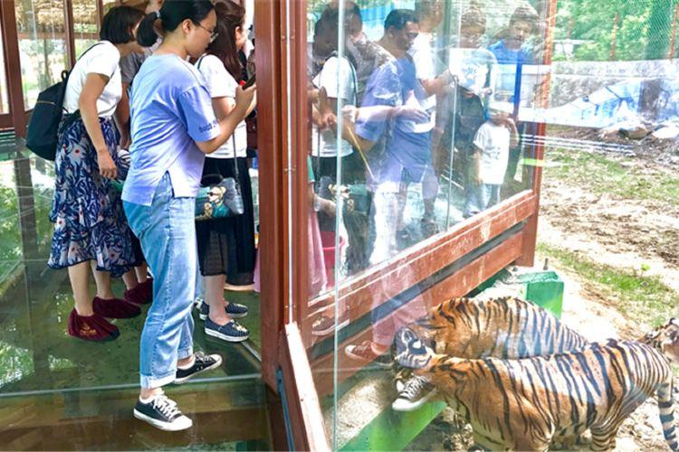 Luanchuanzhuhai Yesheng Zoo2