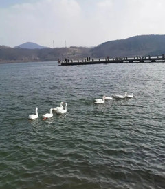 [日照游记图片] 春暖花开,奔你而来-松月湖蓝海钧华