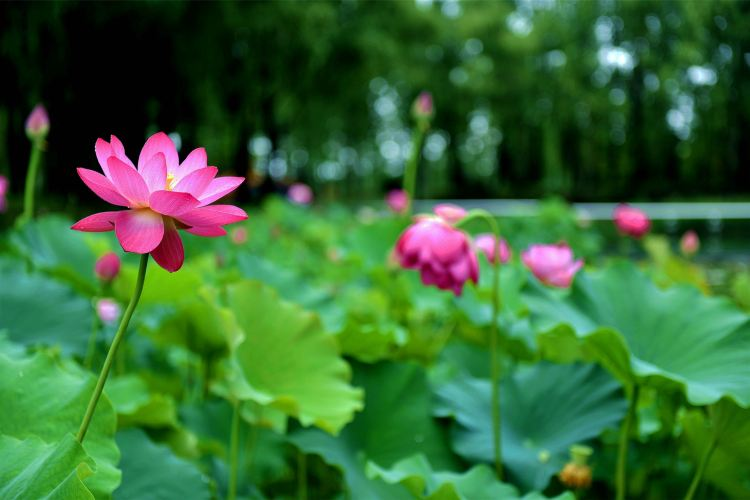 Weishan Wetland Park2