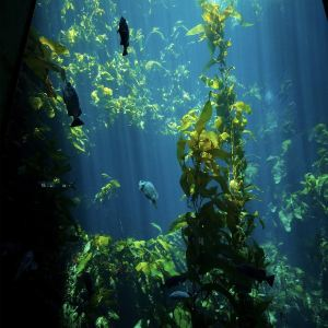 蒙特利湾水族馆旅游景点攻略图