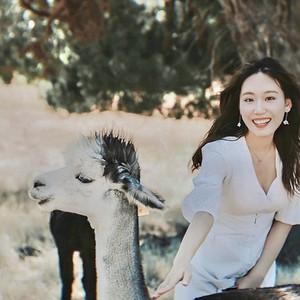 阿德莱德游记图文-在澳大利亚吹着夏天的海风,抱考拉喂袋鼠,尽情拥抱大自然~