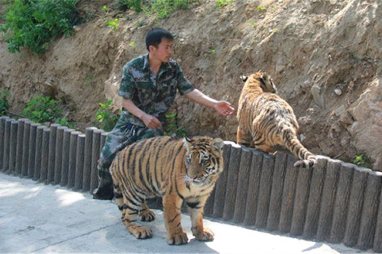 Luanchuanzhuhai Yesheng Zoo4