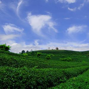 上林游记图文-【世界长寿乡-上林】跟我走进美丽的山水画卷,邂逅网红却又美好安静的上林!
