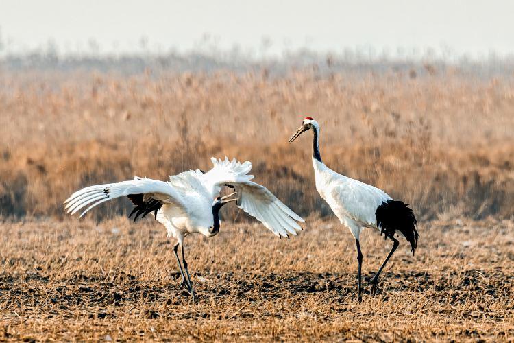 Yancheng Wetland National Nature Reserve Rare Birds4